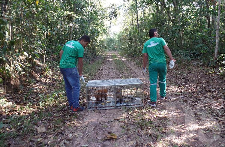 Animais vieram do Ceará para serem soltos na região